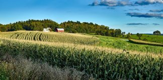 Wisconsin farm cornfield and landscape -- Image by David Mark free use from Pixabay