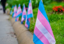 Row of transgender pride flags along a curb